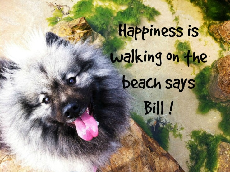 Bill beach walk