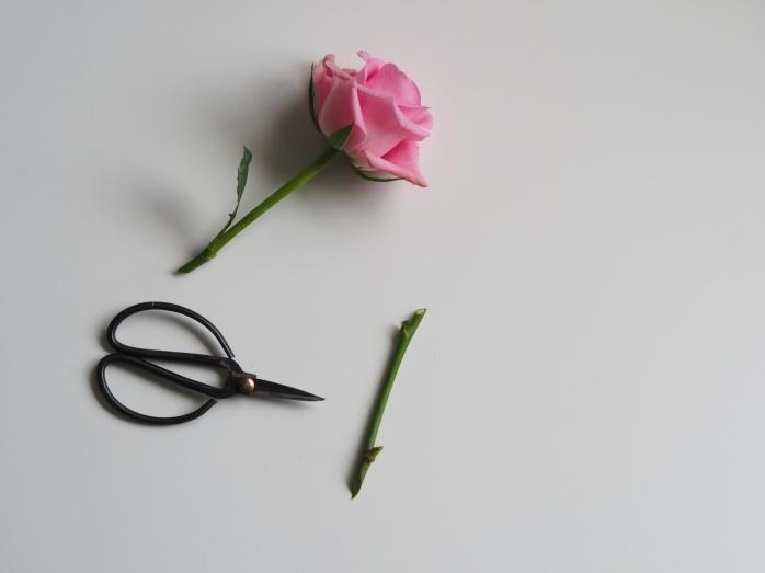 rose-work-space